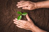 Hands Of Farmer Growing Plant A Tree Natural Background,plant A Tree Growing Plant The Soil And Seed poster