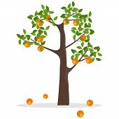 Orange Tree, A Tree With Oranges. Ripe Oranges Hang On A Tree. Flat Design, Vector Illustration, Vec poster