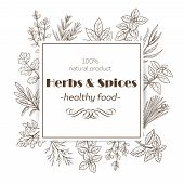 Herbs And Spices. Banner Template With Hand Drawn Sketch Herbs For Farmers Market Menu Design. Vecto poster