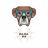 Boxer Dog Wearing In Glasses. Boxer Geek. Vector Illustration Isolated On White Background. poster