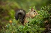 Squirrel From Finland. Finnish Nature. Beautiful Scandinavian Nature. Wild Nature. Beautiful Picture poster