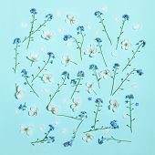 Spring Aqua Blue Background With White Blooming Apple And Forget-me-not Flowers, Close-up Top View,  poster