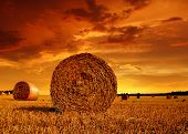 picture of fall-wheat  - Straw bales on farmland with red cloudy sky - JPG