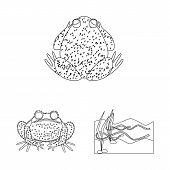Vector Design Of Amphibian And Animal Symbol. Set Of Amphibian And Nature Stock Symbol For Web. poster