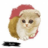 Munchkin Kitten Digital Art Illustration With Inscription. Watercolor Portrait Of Sausage Cat. Close poster