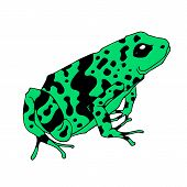 Frog Cartoon Tropical Green Animal Cartoon Nature Icon Funny And Isolated Mascot Character Wild Funn poster
