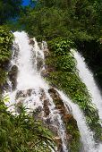 pic of hydrophytes  - Beautiful waterfall amidst lush green vegetation in Northern Colombia - JPG
