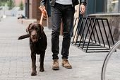 Cute brown purebred dog and his owner moving down street of the city while chiiling together in the  poster