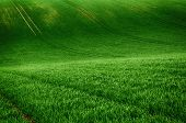 Rolling Sunny Hills With Fields Suitable For Backgrounds Or Wallpapers, Natural Seasonal Landscape.  poster
