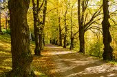 Autumn Forest Scenery With Road Of Fall Leaves & Warm Light Illumining The Gold Foliage. Footpath In poster