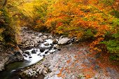 picture of fukushima  - Autumn colours of Nakatsugawa valley in Fukushima Japan - JPG