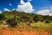 Bush and savanna landscape in Africa. Tsavo West, Kenya.