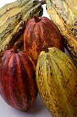 Cocoa Fruits Ensemble