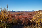 image of denali national park  - Autumn colors in Alaska - JPG