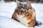 image of hairy  - the beautiful cat on sits on snow - JPG