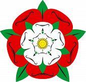 foto of english rose  - Tudor rose  - JPG