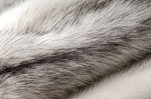 stock photo of villi  - Pastel black cross mink fur texture close - JPG