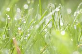 Abstract spring background of green grass with water drops