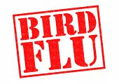 image of avian flu  - BIRD FLU red Rubber Stamp over a white background - JPG