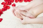 Beautiful Female Feet And Rose Petals
