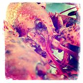 Instagram Style Image Of A Boiled Lobster