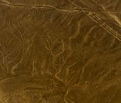 picture of geoglyph  - Nazca Lines Monkey as viewed from a plane Nazca Peru.