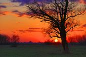 Old tree in steppe on sunset background