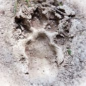 Animal Footprint