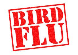 image of avian flu  - BIRD FLU red Rubber Stamp over a white background - JPG