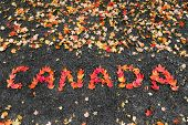 pic of canada maple leaf  - The words Canada written with maple leaves - JPG