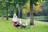 image of baby goose  - Funny Little Baby Girl Playing With Wild Ducks In A Beautiful Autumn Park - JPG