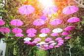 picture of marina  - Pink and white umbrellas decorate streets in the resort town Bellaria Igea Marina Rimini Italy - JPG