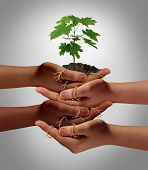 stock photo of friendship  - Community cooperation concept and social crowdfunding investment symbol as a group of diverse hands nurturing a sapling tree with roots wrapped and connecting the people together - JPG