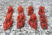 picture of craw  - Red river boiled crayfish on grey kitchen granite worktop in rows front view - JPG