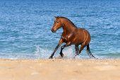 foto of stallion  - Stallion Springs on the sea beach on a beautiful background - JPG