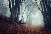 image of crimea  - Fog in the Forest - JPG