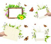 foto of summer insects  - Collection of summer frames with photo - JPG