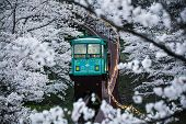 pic of tram  - A long the way of tram to be fulfill with white Sakura like an heaven - JPG