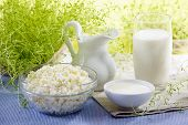 pic of milk products  - Jug of milk and dairy products against a green grass - JPG