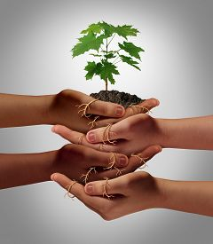 stock photo of socialism  - Community cooperation concept and social crowdfunding investment symbol as a group of diverse hands nurturing a sapling tree with roots wrapped and connecting the people together - JPG