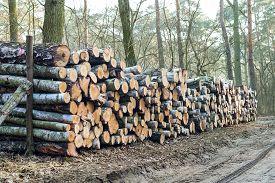 stock photo of cutting trees  - wood logs  - JPG
