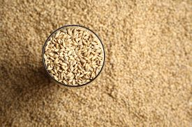 picture of malt  - Tall beer glass with barley malt grains on a layer of malt - JPG