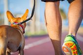 image of dog-walker  - chihuahua dog close together to owner walking with leash outside at the park as friends - JPG
