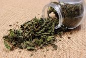 picture of nettle  - Closeup of dried nettle dried nettle pouring out of glass jar on jute canvas - JPG