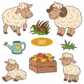 image of color animal  - Color set of cute farm animals and objects vector family sheep - JPG