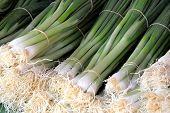 foto of bundle  - On market stall designed bundled fresh spring onions  - JPG