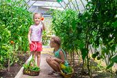 foto of root-crops  - Cute little girls collects the crop cucumbers in the greenhouse - JPG