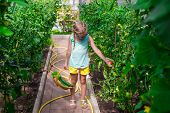 foto of root-crops  - Cute little girl collects crop cucumbers and tomatos in greenhouse - JPG