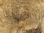 pic of hay bale  - Detailed photo of half wet bale of hay - JPG