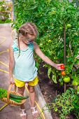 stock photo of root-crops  - Cute little girl collects crop cucumbers and tomatos in greenhouse - JPG
